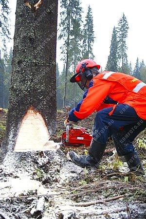 Лесозаготовка деревообрабатывающая
